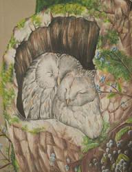 Owl Chicks by AliyaSapphire