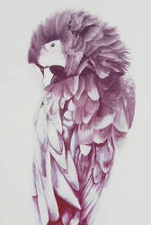 Macaw by AliyaSapphire