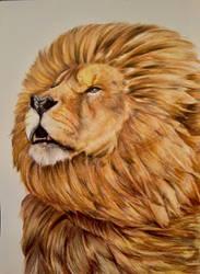 Lion by AliyaSapphire