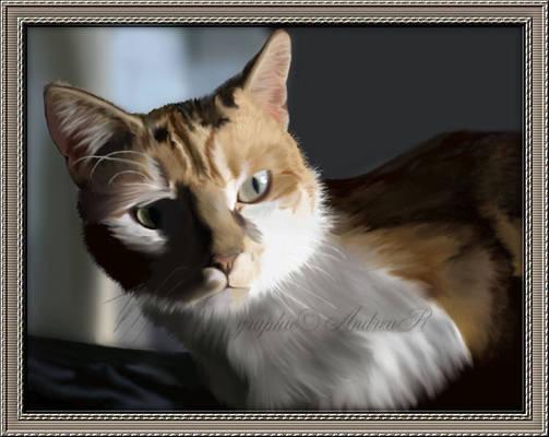 Desi my Cat