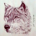 Realistic Wolf Drawing