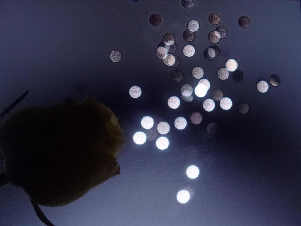 Flower Power by xdarkmemoriesx