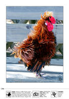 Chicken by Pericles