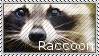 Raccoon Stamp by MattsMadeOfCandy