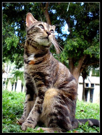 Possing Cat by JacquiJax
