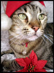 Christmas Cat by JacquiJax