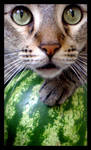 Cat and Watermelon III