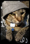 Gangsta Cat II