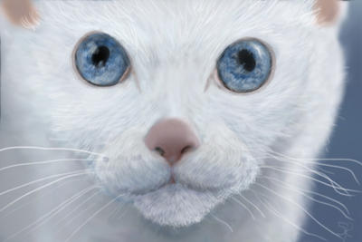 White Cats Face Artistic Close Up by Ozimandus4321