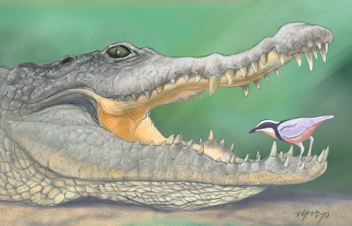 crocodile bird and relationship quiz