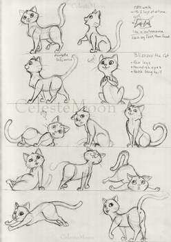 Blizzard the Cat Concept Poses