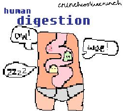 Human Digestion by crunchcookiecrunch