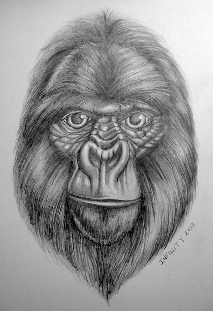 Gorilla pencil sketch w shading by diamonicus