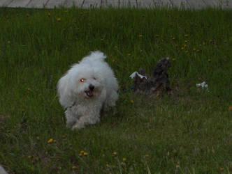 puppy by 2lilrebal55