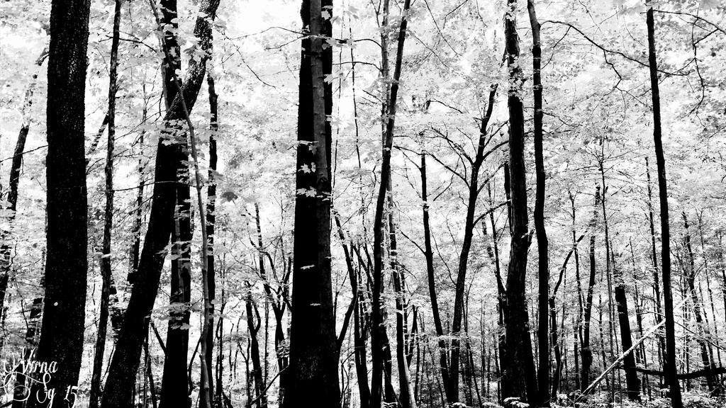 Winter dreams by virnagray