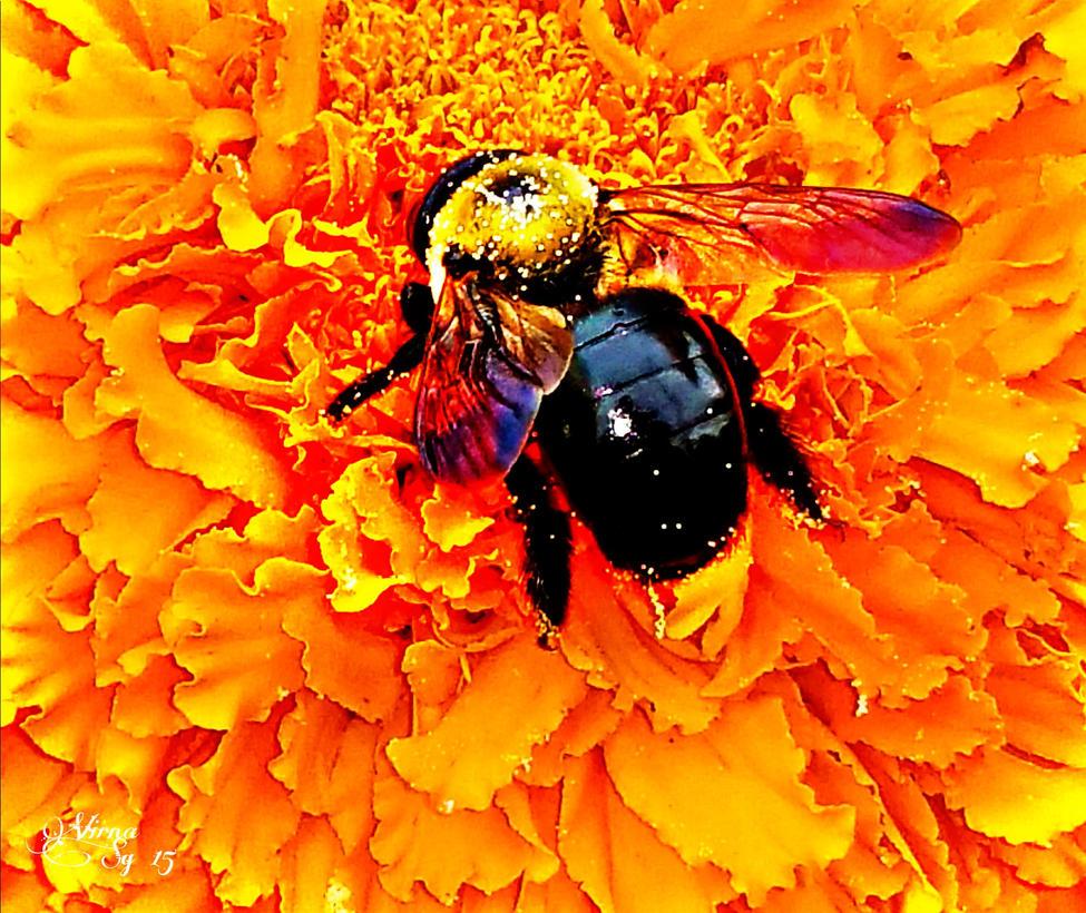 Bee-utiful! by virnagray