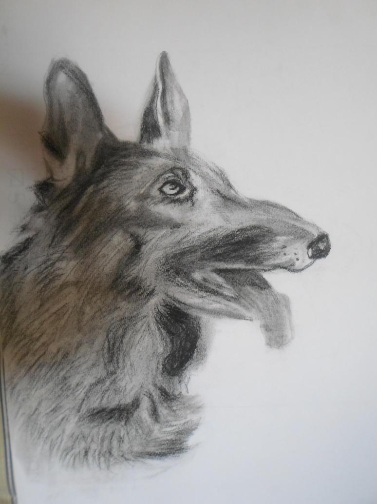 Dog by Yue-Yuki