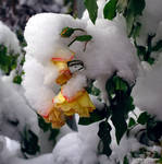 Snow attack by squareprismish