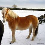 That pony again