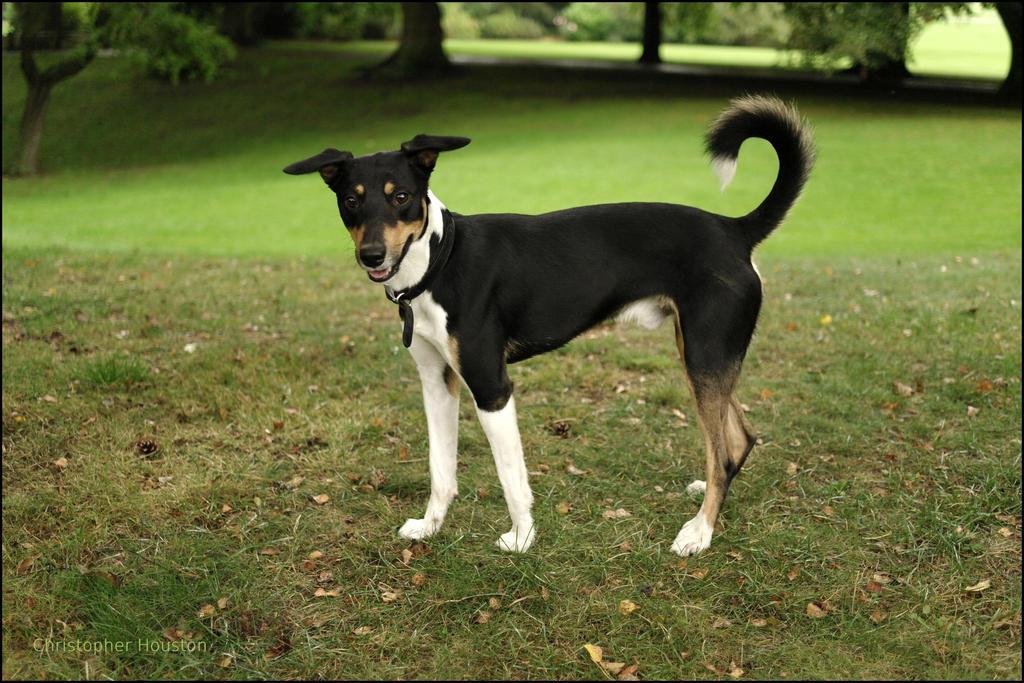 My dog Benji by squareprismish
