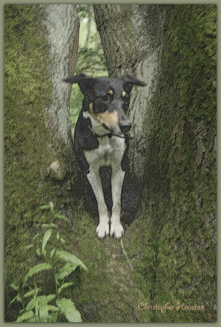 My puppy Benji by squareprismish