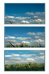 Triology by photomorgana