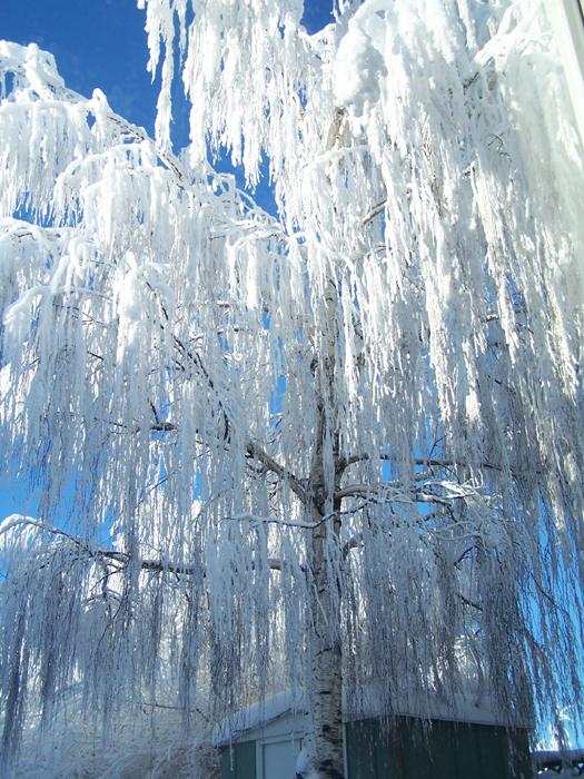 Hoar Frost by Trigar