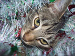 Tinsel Kitty