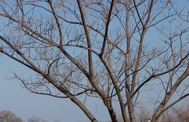 Tree Branches - Dead by silence-stock