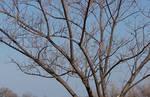 Tree Branches - Dead