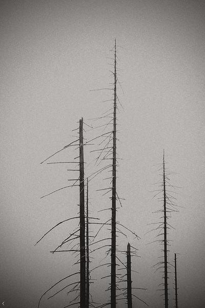 ekkoet av stillhet V by slavic-frost