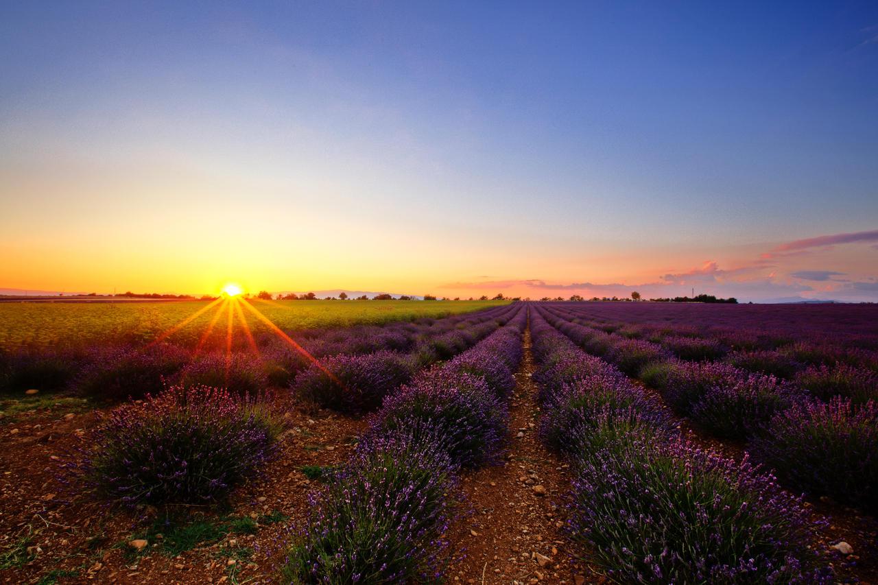 lavender field by YODA79