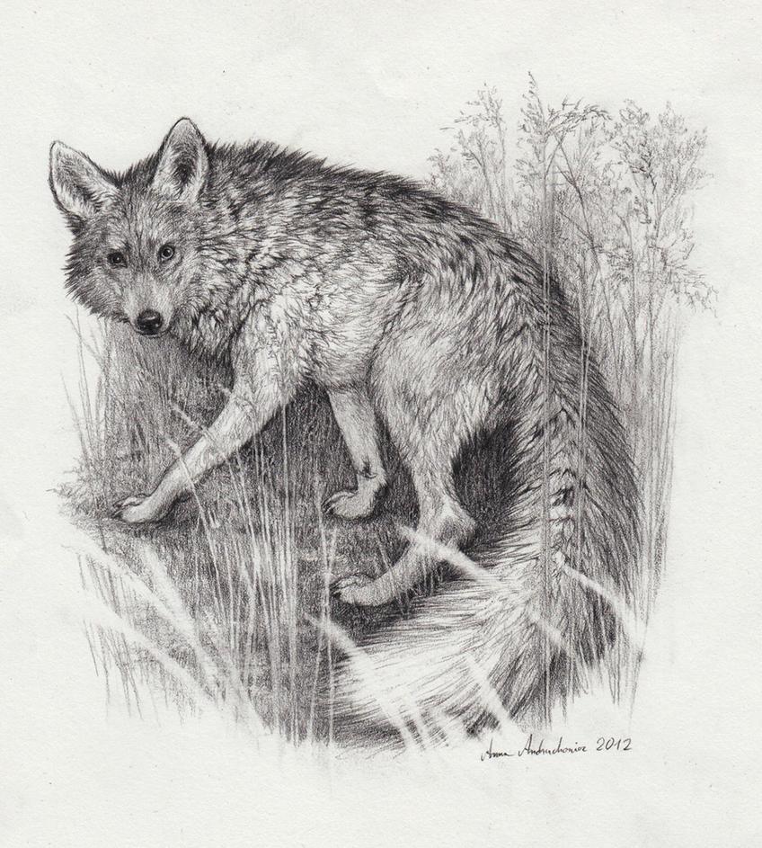 Wolfox by Grawuar