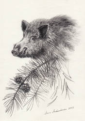 Boar-forest