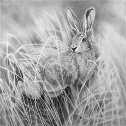 Fauna and Flora - Hare