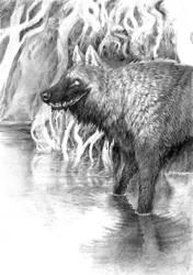 The Swampwolf