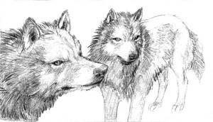 Wolfs - sketch