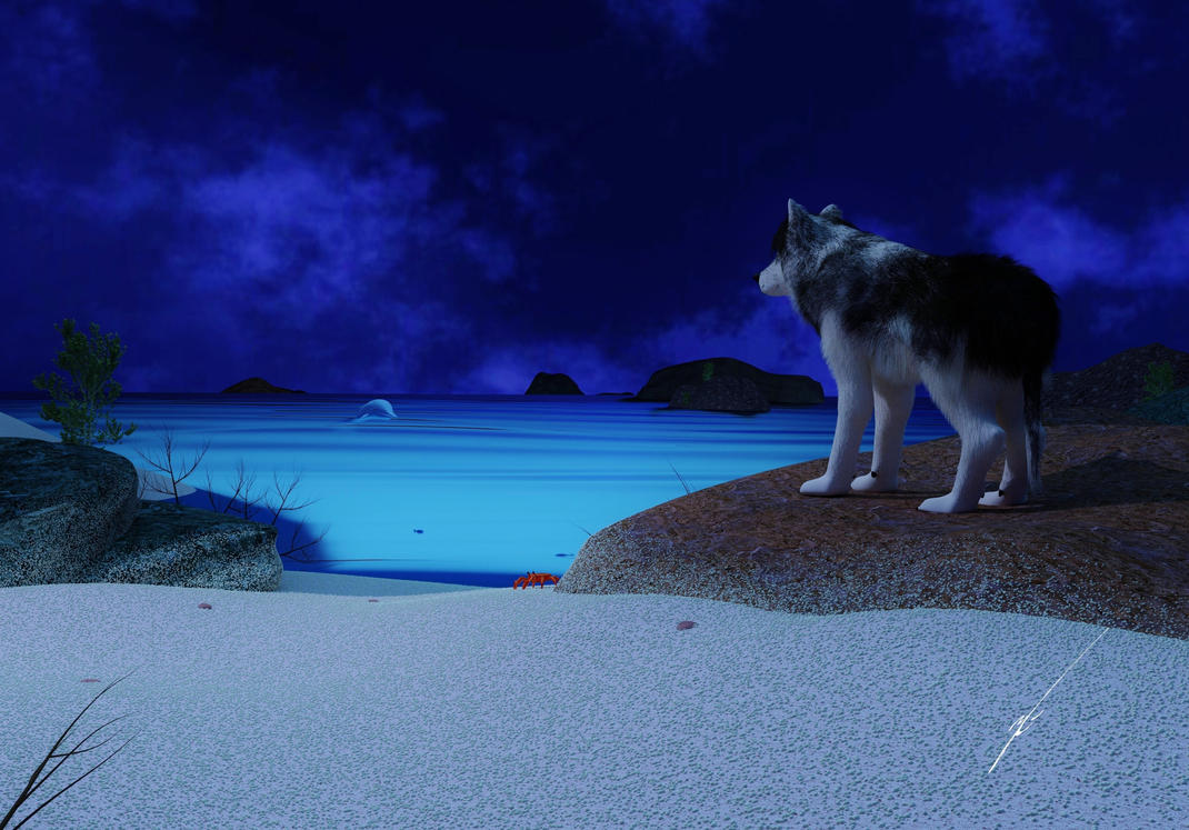 Wolf and Dolphin by Blinesy on DeviantArt - photo#3