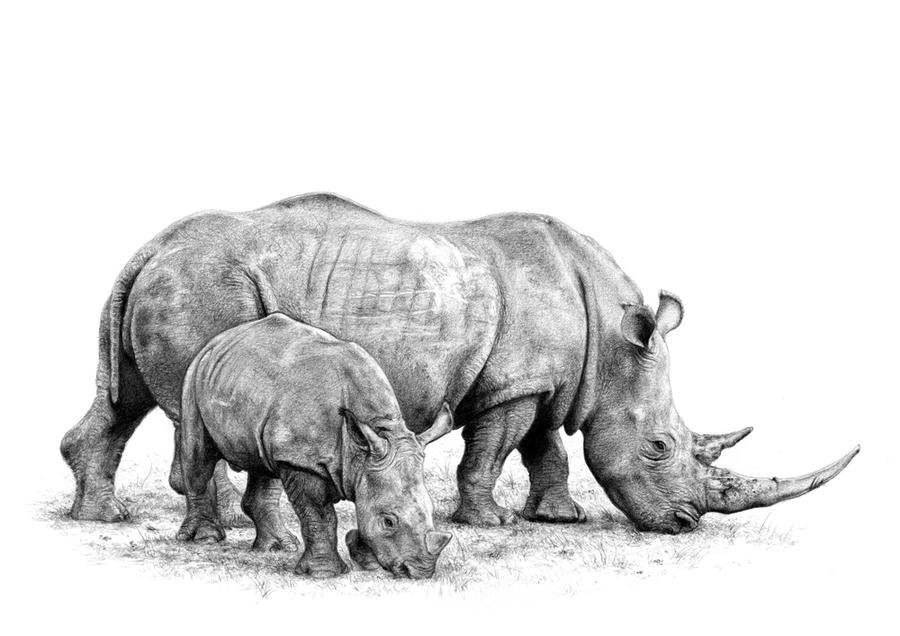 White Rhinoceros and infant by arhicks on DeviantArt