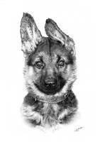 Kaiser - puppy by arhicks