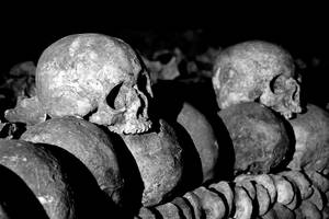 Skulls from the Catacombes