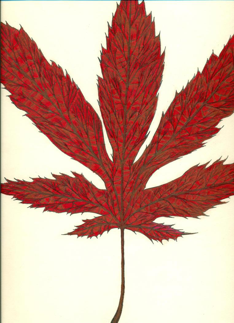 Japanese maple leaf by frolet on deviantart Japanese maple leaf