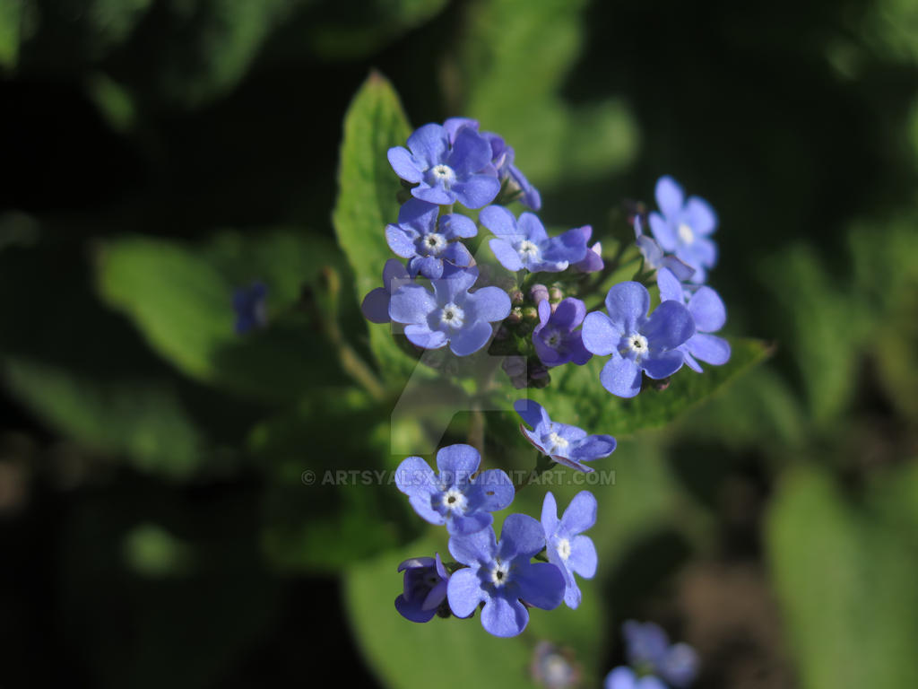 Tiny Blue Flowers By Artsyal3x On Deviantart