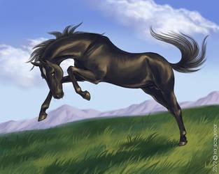 Black horse by scargeear
