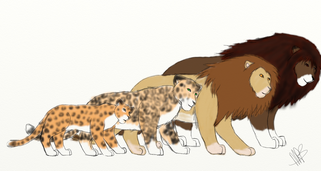 Image Gallery Leopard Size