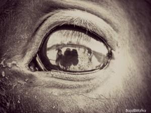 Iloris's Profile Picture