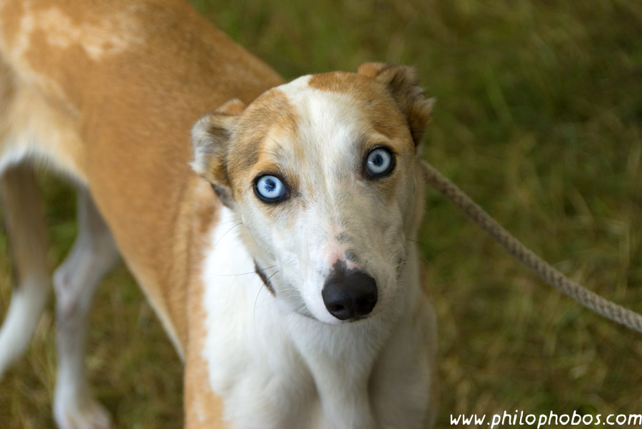 My Dog Has Blue Eyes