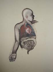 study human torso by hermocrates