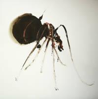 hormiga by hermocrates