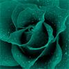 Teal rose by BlueRavenAngel
